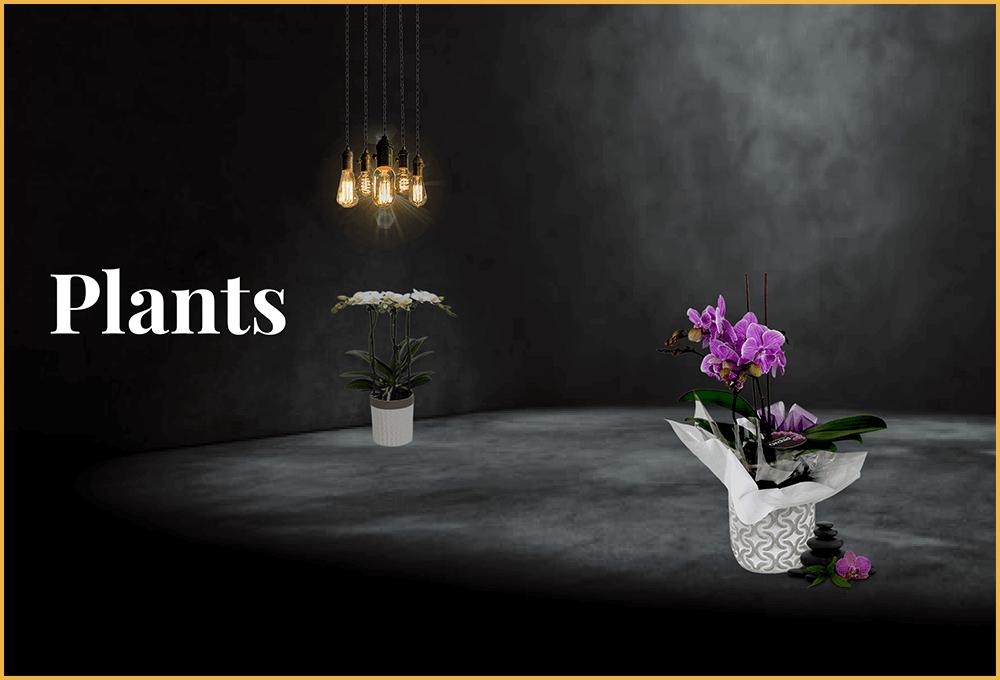 flower plants melbourne